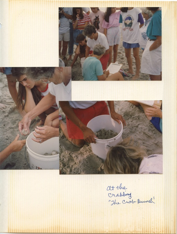 beach crab experiment group