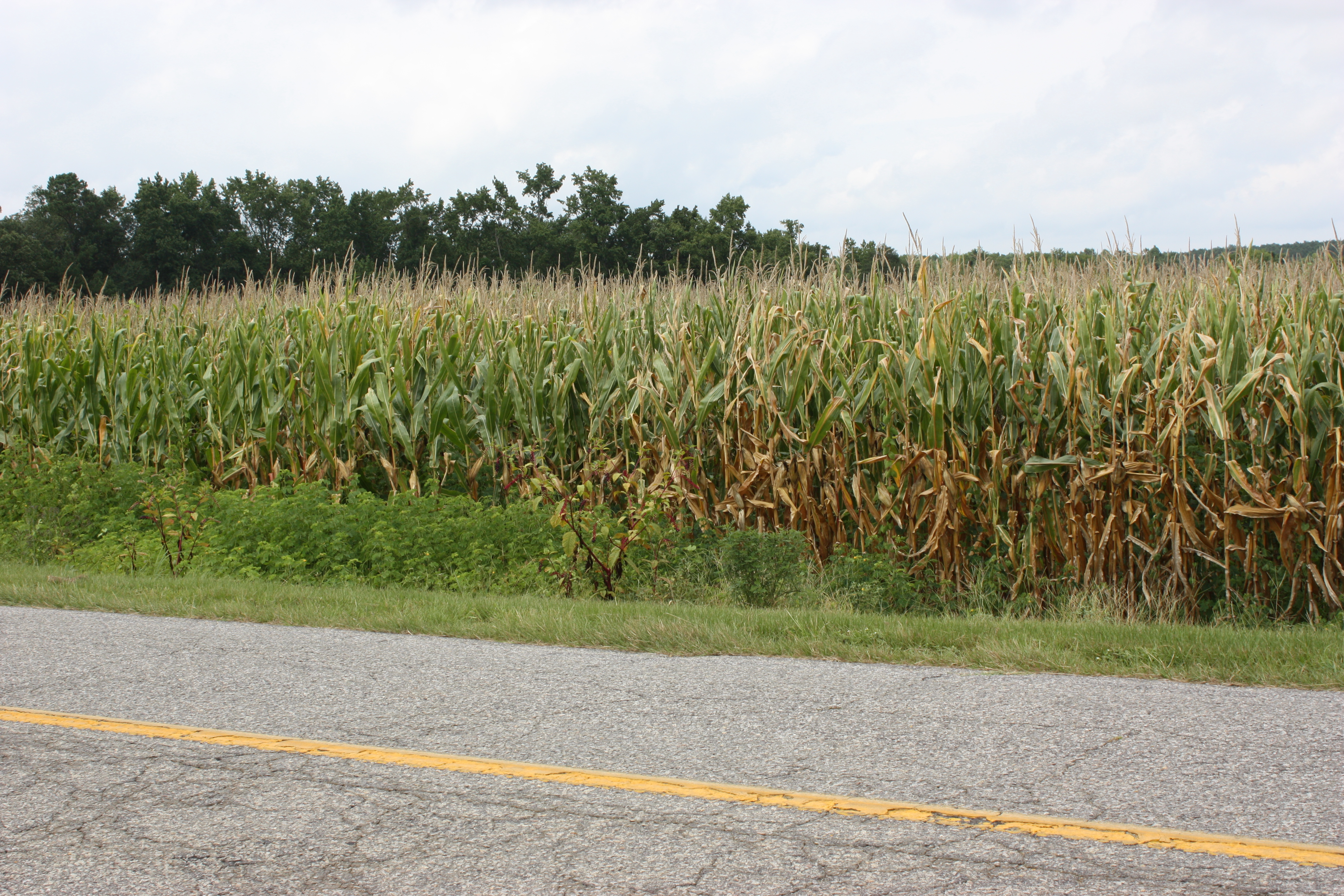 video response to king corn Videos 0 you have yet to add items in your cart feed feed tracks king corn beatzz.