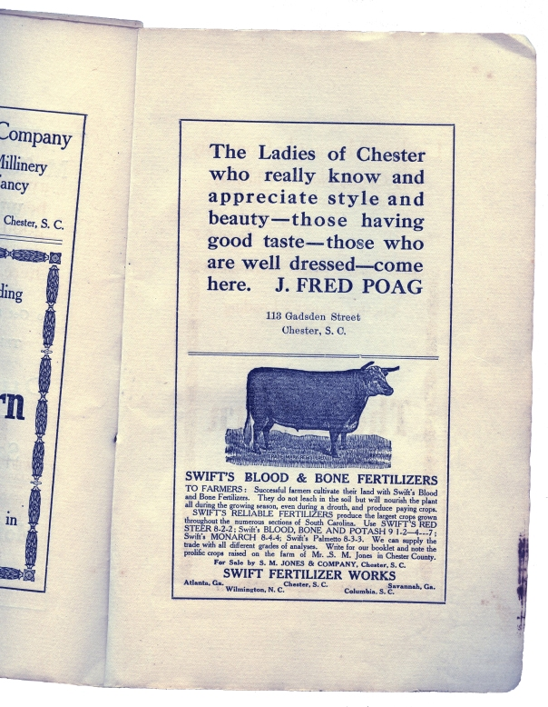chester cookbook cow ad